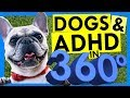 5 Ways Dogs Help ADHD Brains -- in 360 Degrees!!!
