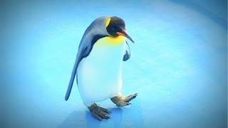 夏ですし暑いですし涼しいペンギンさん。 It is summer, is hot and is ...