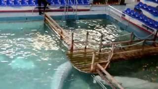 Дельфинарий (тренировка)(Ярославль, п.Дубки., 2016-09-05T19:30:58.000Z)