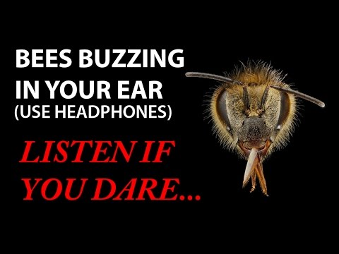 bees-buzzing-in-your-ear!-(virtual-3d-sound)-zuccarelli-holophonics