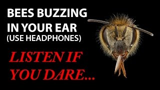 BEES BUZZING IN YOUR EAR! (Virtual 3D Sound) Zuccarelli Holophonics