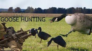 Sweden Goose hunting | Season starter 2015