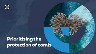 Prioritising the protection of corals I Abu Dhabi Ports