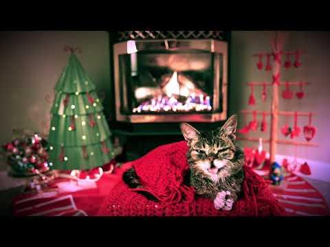 Deanna King - Famed Internet Cat Lil Bub Dies