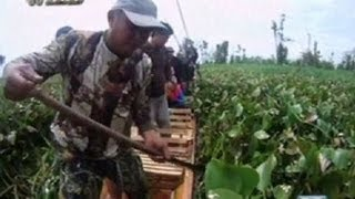Panganib ng pag-atake ng buwaya sa Agusan Marsh