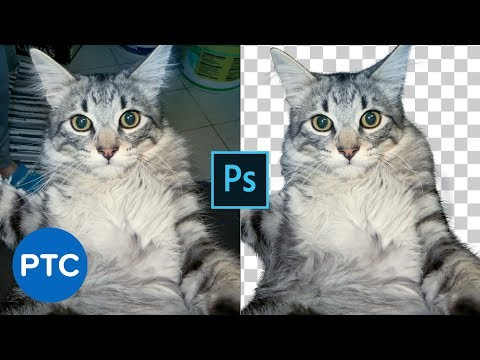 Cut Out Fur From Busy Backgrounds In Photoshop thumbnail