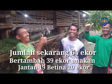 Perkembangan Bantuan Domba (BIB Lembang) di Kab. Tegal