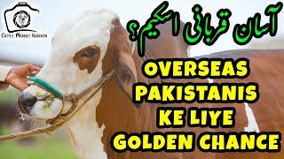 Low + Mid Range Cattle at Zohair Cattle Farm for Bakra Eid 2021 | Qurbani Cows Cattle Market Karachi