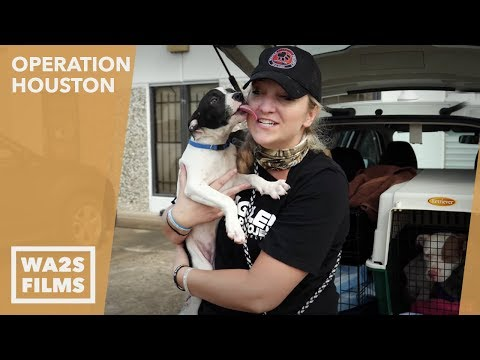 Hope For Dogs Like The DoDo - Houston K9-11 Dog Rescue & Beagle Freedom Project Save Puppy & Mama