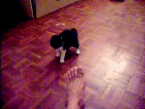Catfight Un Combat De Chat