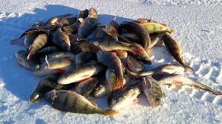 ВОТ ЧТО НУЖНО ОКУНЮ В ГЛУХОЗИМЬЕ Зимняя рыбалка 2021