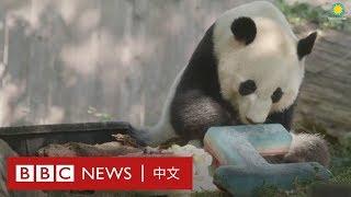 中國熊貓外交的歷史- BBC News 中文