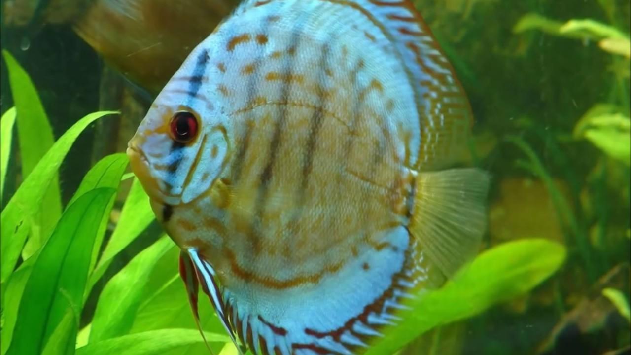 Jenis Jenis Ikan Hias Yang Cocok Dipelihara Di aquascape ...