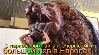 Львица индивидуалистка, ловеласы Персей и Кай, крупнейший лев Европы!