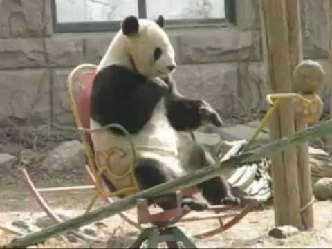 Exceptionnel Panda On Rocking Chair