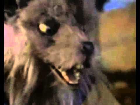 Tartarughe Ninja - L'avventura continua (Serie TV 1997 ...