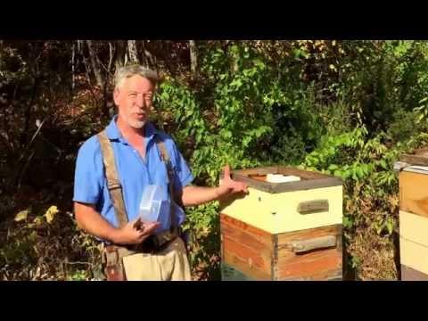 Preparing Honey Bees For Winter 101