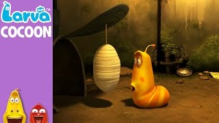 official cocoon - mini series from animation larva