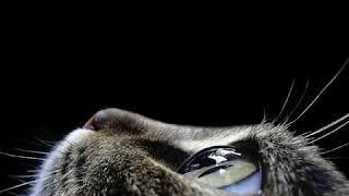 Aleksin-& koshka  Алексин &- Кошка