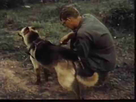 Anthony Jerone S School Of Dog Training And Career Inc