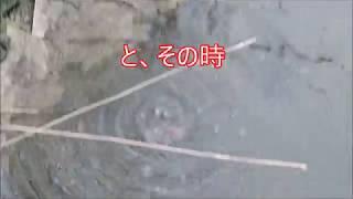 小規模クリークでなんじゃこりゃミステリー生物に出会う 小規模#クリーク #網を持って#ガサガサ漁で #なんじゃこりゃミステリー な生物に出会う チャンネル登録してね ...