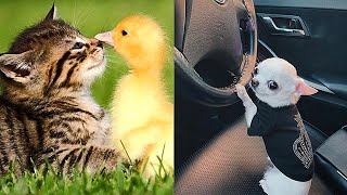 Funny Animals! Cute Funny Animals Video Compilation #19