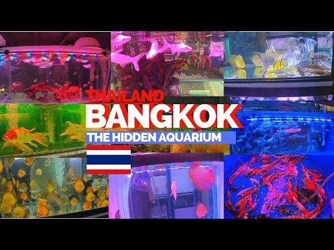 Bangkok Thailand - Tropical fish market aquarium.  Very worth it!