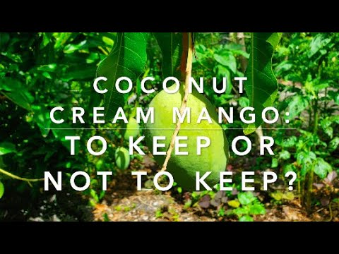 Coconut Cream Mango 2021: To Keep or Not To Keep?