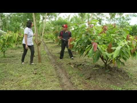 Indonesia: A chance for chocolate IFAD (EN)