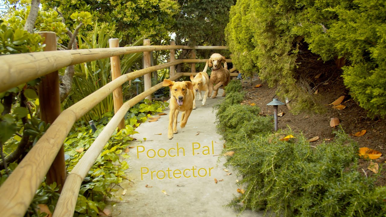 Pooch Pal Protector Launch Ad