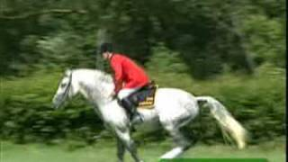 Hot n Cold - Horses