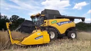 Maszyny w rzepak! Żniwa 2018 #3- Czarne złoto rolników.