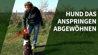 Hund das Anspringen abgewöhnen ► Praxisvideo Hunde trainieren