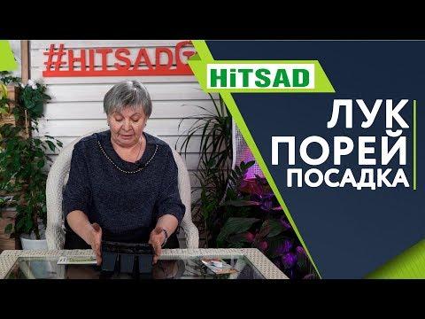 Как Посадить Лук Порей ✔️ Секреты Посадки ✔️ Советы от Хитсад ТВ