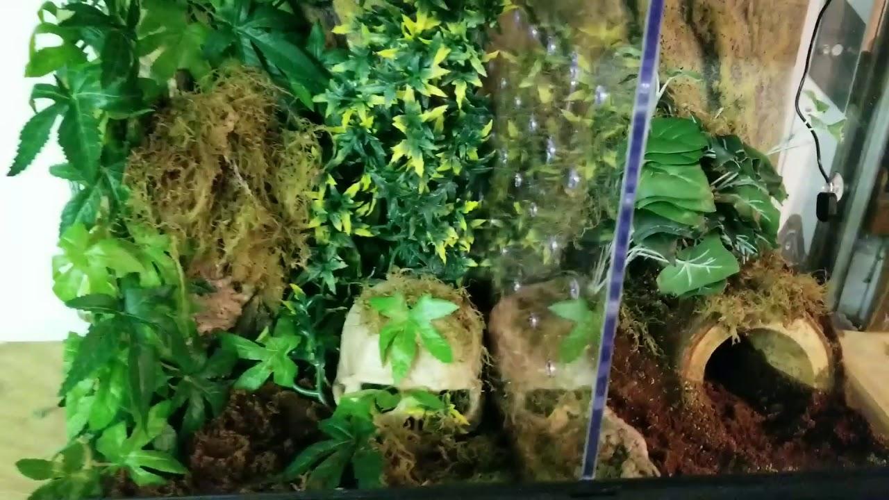 Diy Exo Terra Dual Tarantula Terrarium Enclosure Habitat Monsoon