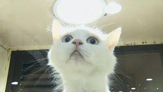 Саудовцам предлагают брать кошек и собак из приютов