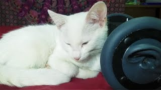 1 Hour CUTEST CAT PURRING By This Baby KITTEN | Relaxation | ASMR for Sleep