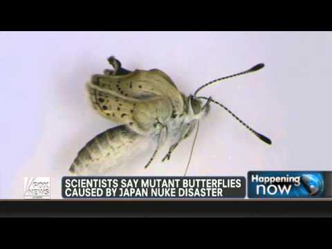 Mutant butterflies found near Fukushima plant  in japan