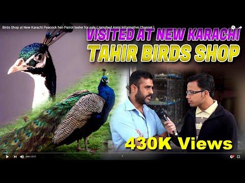 Birds Shop at New Karachi Peacock hen Parrot teeter for sale (Jamshed Asmi Informative Channel )