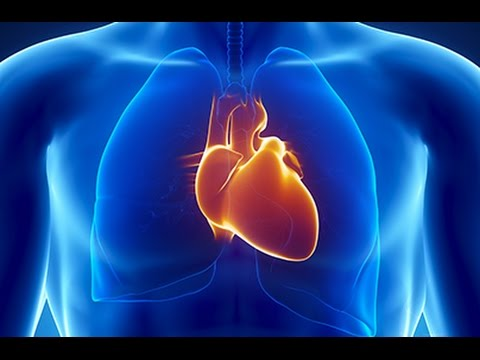 Is Cardiovascular Disease Really Linked to a High-fat Diet?