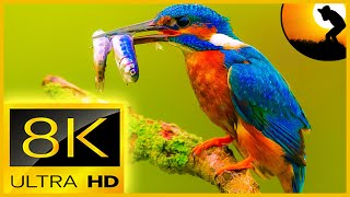8K VIDEO ULTRAHD 120FPS SLOWMOTION | BREATHTAKING SLOWMOTION BIRDS WITH RELAXATION SOUNDS (FUHD)