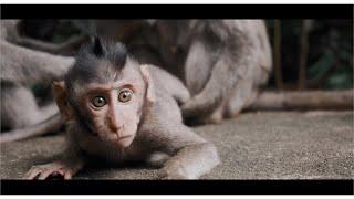 Bali  |  Fujifilm X-t3 (fuji Xt3)  |  4k