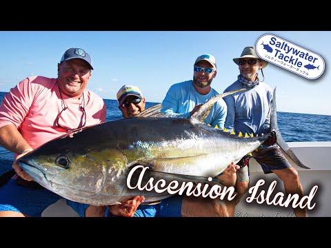 Topwater Yellowfin Tuna In Ascension Island
