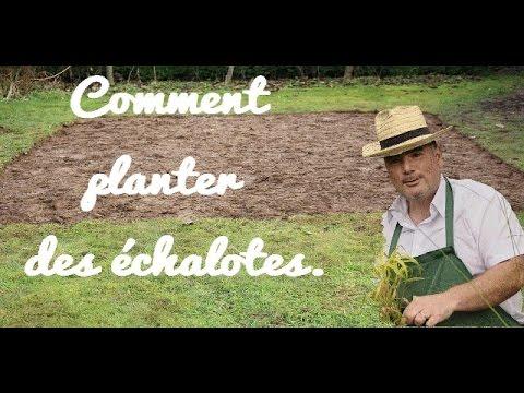 11 ème cours, comment planter des échalotes. - YouTube
