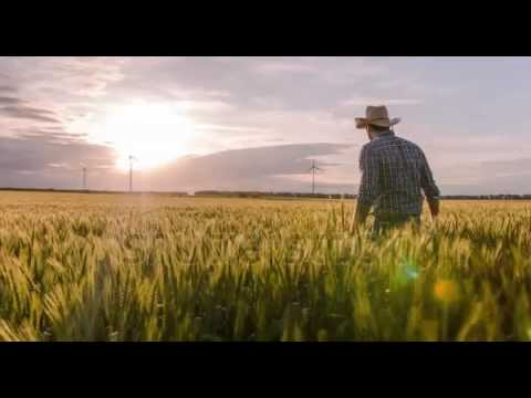 Wheat Field Farmer Walking Windmill Sunlight Landscape Nature Agriculture Growth Drone Footage Man S
