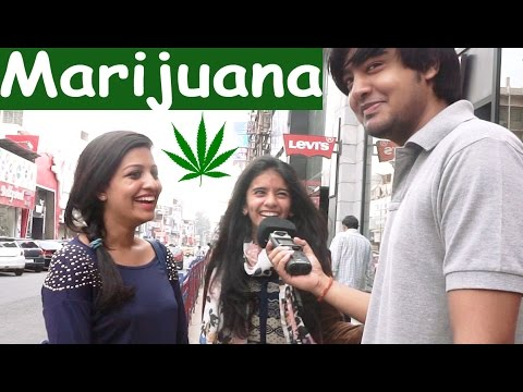 Bangalore on Marijuana I Boba Lovers