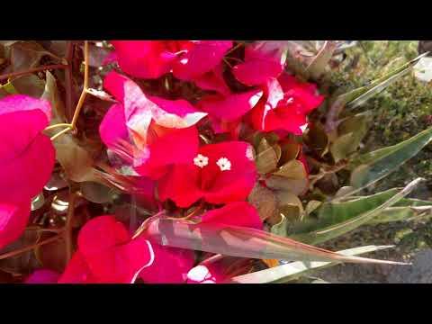 Peaceful California Flowers