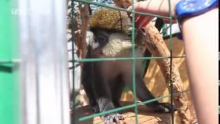 В Казани открылся зоопарк «Ривьера»