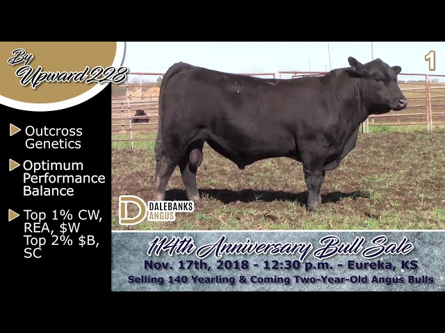 Reference Sire Review Lot 1