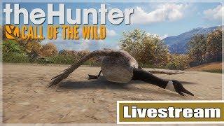 The Hunter Call of the Wild: Bugs & Gänsesuche in Hirschfelden - Livestream